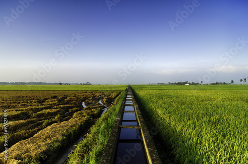 Fényképezés amazing view paddy fields at morning