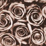 tło brązowe róże - karta sympatii - 97645237