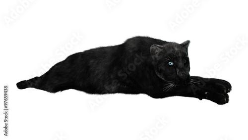 Canvas Prints Panther Big Cat Black Panther