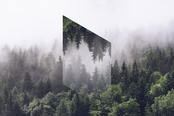 Foggy Evergreen Forest with...