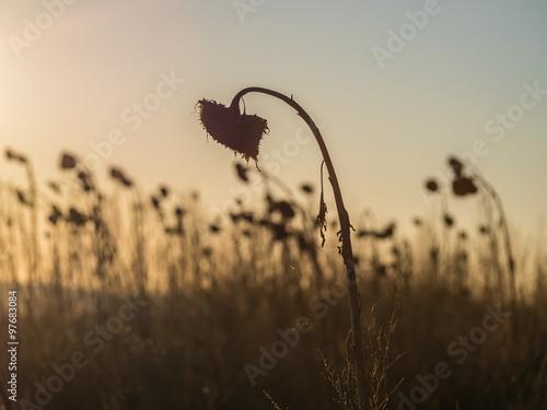 Verwelkte Sonnenblumen im Sonnenuntergang Canvas Print