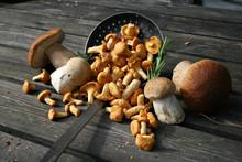 Organic Lifestyle Waldpilze Zu...