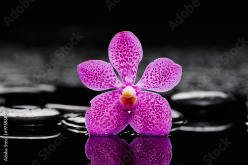 Poster Spa Still life with orchid with pebbles on wet background