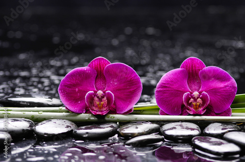 Poster Spa orchid with long leaf and stones on wet background
