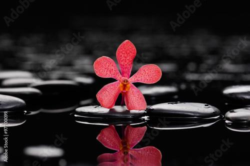 Staande foto Spa Zen stones and orchid
