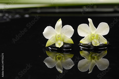 Poster Spa Two white orchid with plant on black stones