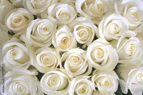 Ingelijste posters Roses White roses background