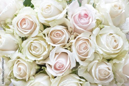 Plakat Białe i jasnoróżowe róże