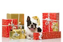 Hund Mit Weihnachtsgeschenken