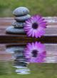 flor y piedras reflejadas en el agua