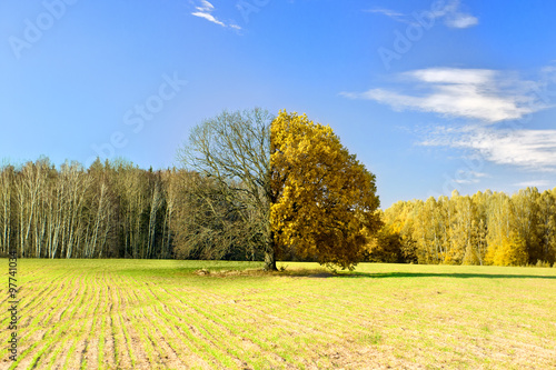 Fotobehang Zwavel geel Tree captured at different times of the year