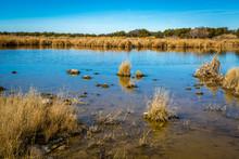 Arizona Wetlands And Animal Riparian Preserve.