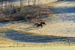 Pferde auf der Weide - Winter