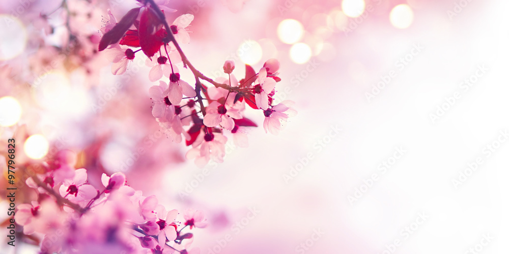 Fototapety, obrazy: Spring blossom border with pink blooming tree