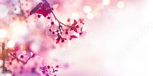 Spring blossom border with pink blooming tree