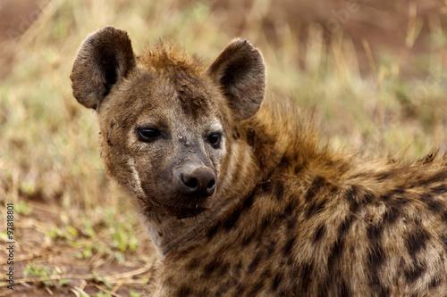 Deurstickers Hyena Hyäne