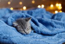 Little Kitten Sleeping Under A Blanket