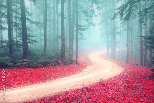Tuinposter Weg in bos Autumn foggy mysterious forest with road. Beautiful colorful leaves on the forest road.