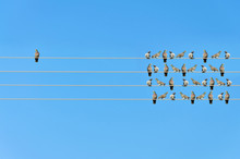 Individuality Concept, Birds On A Wire