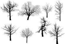 Set Of Eight Bare Trees Isolated On White