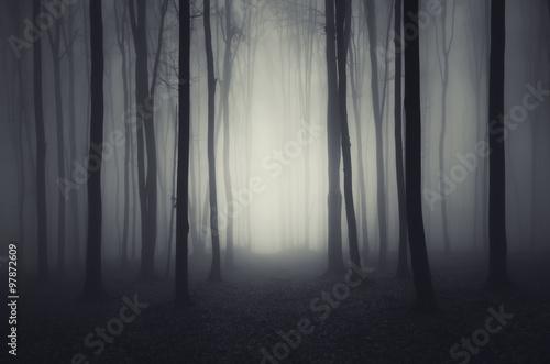 smukle-pnie-drzew-w-ciemnym-lesie
