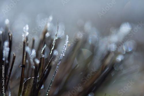Keuken foto achterwand Paardebloemen en water Gras, Eiskristalle kalt