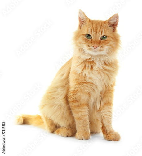 Fotografia  Adorable red cat isolated on white background