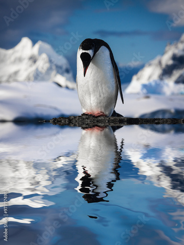 Papel de parede  penguin on the rocks