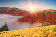 Fog In The Autumn