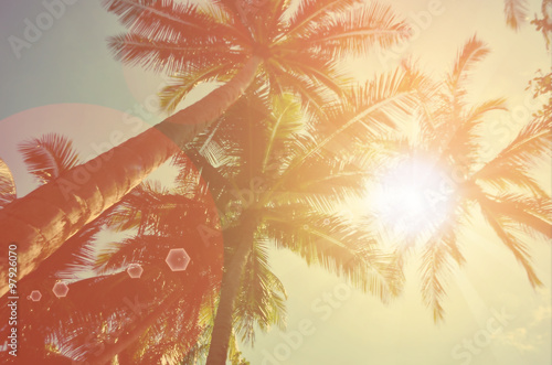 plakat Blur tropical palm tree with sun light abstract background.