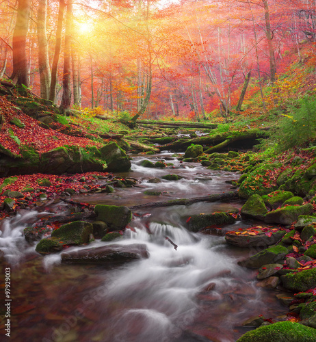 Poster Marron chocolat Stream in the forest gold