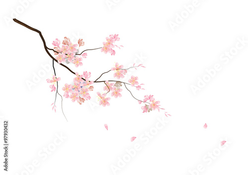 Fotografia, Obraz Cherry blossom flowers with branch  on white background,vector illustration