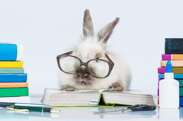 Funny dwarf rabbit with glasses reading a book