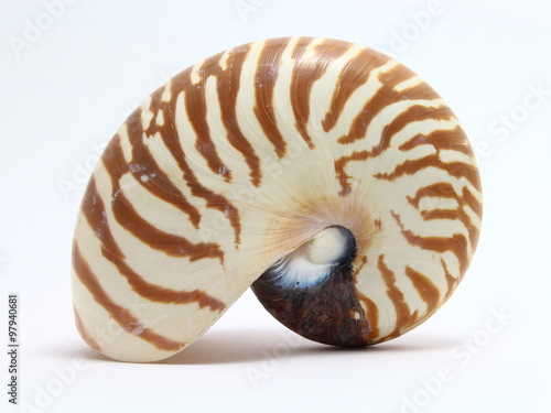 Obraz na plátně  Nautilus shell against a white background
