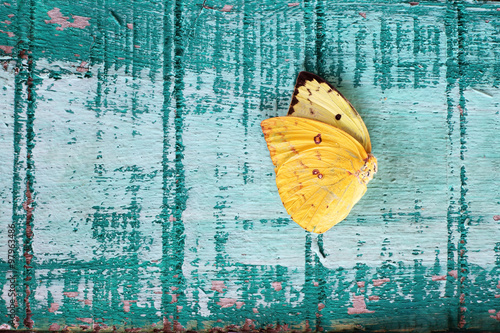 Fotobehang Vlinders in Grunge butterfly wing on grunge background