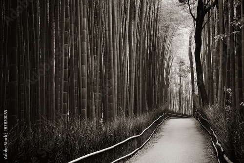 Acrylic Prints Gray traffic Bamboo Grove