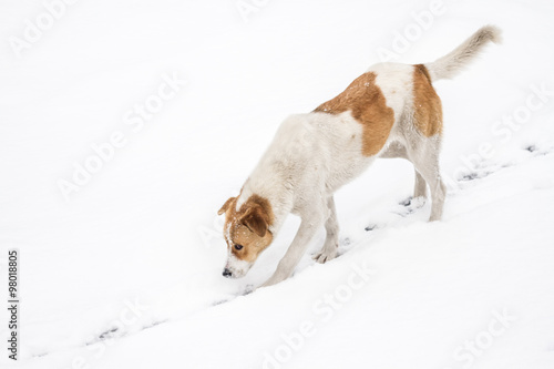 Foto op Plexiglas Arctica Street Dog Walking and Hounding in the Snow