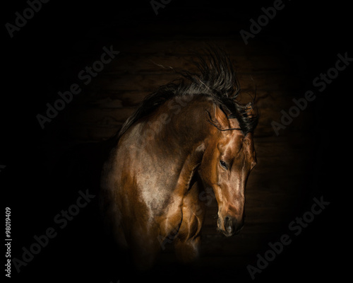 Foto op Canvas Paarden portrait of the brown angry horse