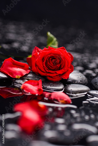 Obraz na plátně  Still life with red rose with petals and therapy stones