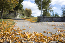 Scattered Colorful Autumn Leaves On A Road