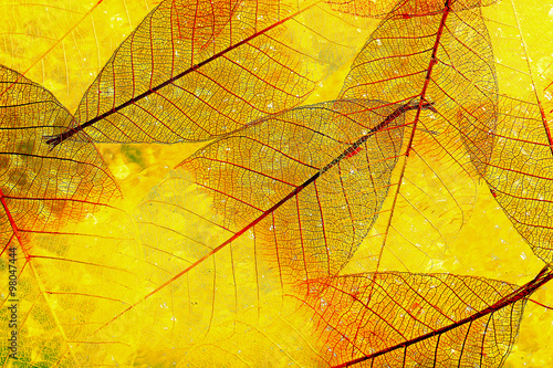 Poster Squelette décoratif de lame Abstract skeleton leaves background