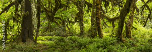 Hall of Mosses Panorama