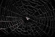 Spider Web Isolated On Black Background
