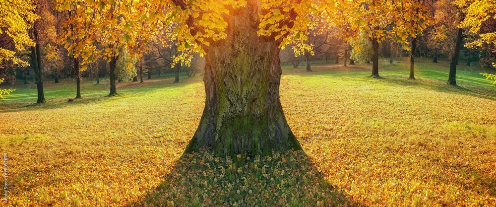 tree in of autumn park