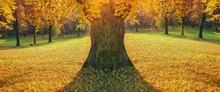 Tree In Of Autumn Park