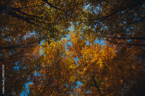 Foto op Canvas Herfst Collection of autumn forest. Autumn landscape