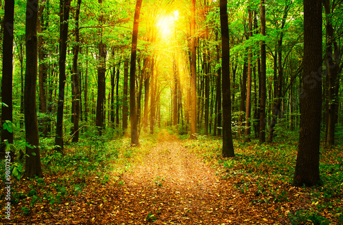 Papiers peints Forets Forest with sunlight