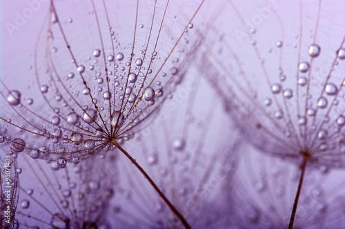 Foto op Canvas Paardebloemen en water dandelion