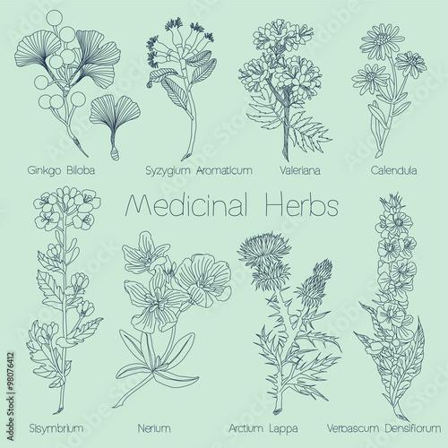 Photo  Set of Medical Herbs