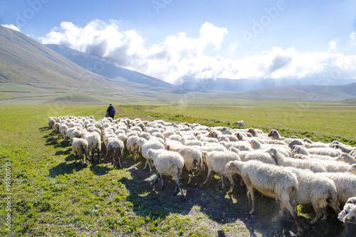 Deurstickers Schapen pascolo sui monti Sibillini, Italia